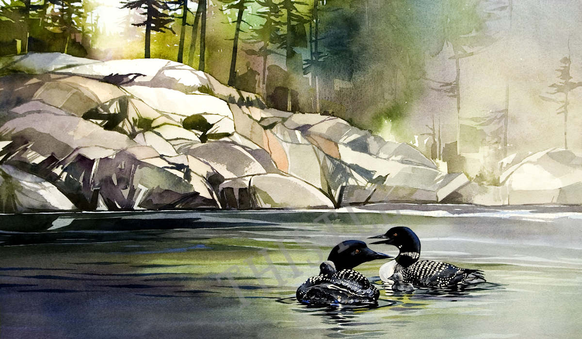 LOONS AT DAWN By Rich Thistle