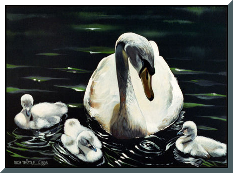 SWANS By Rich Thistle©